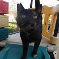 Adopt A Pet :: Tori - Zaleski, OH