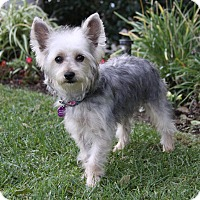 Adopt A Pet :: LEYA - Newport Beach, CA
