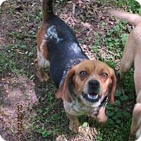 Adopt A Pet :: SPECK - Brookside, NJ