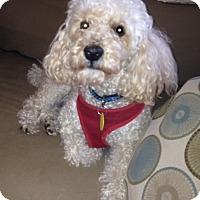 Adopt A Pet :: Pugsley - Grand Rapids, MI