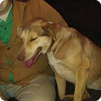 Adopt A Pet :: Sadie - Springtown, TX
