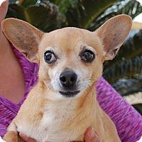 Adopt A Pet :: Roger - Las Vegas, NV