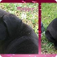 Adopt A Pet :: Maggie - Ringwood, NJ