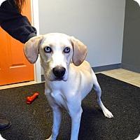 Adopt A Pet :: Alfie - Sparta, NJ