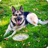 Adopt A Pet :: Ben - Doylestown, PA
