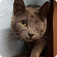 Adopt A Pet :: Carrie - Wenatchee, WA