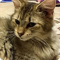 Adopt A Pet :: Minzy - Acushnet, MA