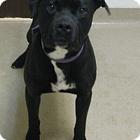 Adopt A Pet :: Billy - Gary, IN