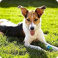 Adopt A Pet :: Sadie - Updated! - Hamilton, ON