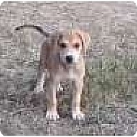 Adopt A Pet :: Austin - Plainfield, CT
