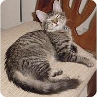 Adopt A Pet :: Baron - Franklin, NC