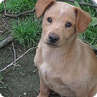 Adopt A Pet :: Isaac - Humboldt, TN