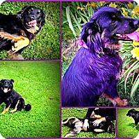 Adopt A Pet :: Gabbi - Jacksboro, TN
