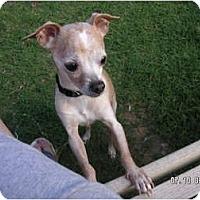 Adopt A Pet :: STEVIE - Phoenix, AZ
