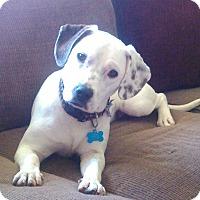 Adopt A Pet :: Tootsie - Toledo, OH