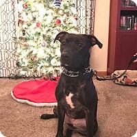 Adopt A Pet :: Jasmine - Huntington, IN