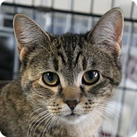 Adopt A Pet :: Puma - North Branford, CT