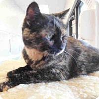 Adopt A Pet :: BIRDY - McKinleyville, CA