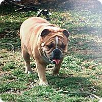 Adopt A Pet :: Mazey - Columbus, OH