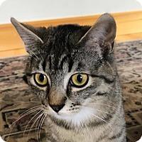 Adopt A Pet :: Damsel - Wenatchee, WA