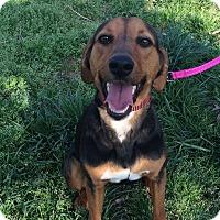 Adopt A Pet :: Dynasty - Laingsburg, MI