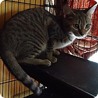 Adopt A Pet :: Carol - Summerville, SC