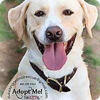 Adopt A Pet :: Leonardo - Scottsdale, AZ