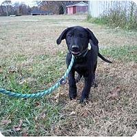 Adopt A Pet :: Willie - Adamsville, TN