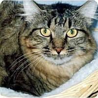 Adopt A Pet :: Fiona - Medway, MA