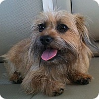 Adopt A Pet :: Fred - Somers, CT