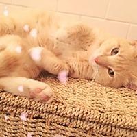 Adopt A Pet :: Peachy - San Antonio, TX