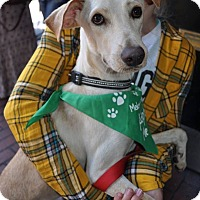 Adopt A Pet :: Lobo - San Diego, CA