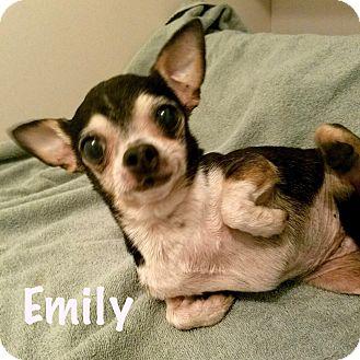 Chihuahua Mix Dog for adoption in Durham, North Carolina - Emily