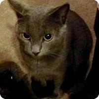 Adopt A Pet :: Eve - East Brunswick, NJ