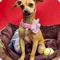 Adopt A Pet :: Oakley - Irvine, CA