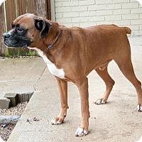 Adopt A Pet :: Casey - Versailles, KY