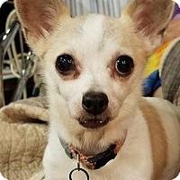 Adopt A Pet :: PINEAPPLE - Franklin, TN