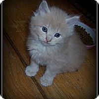 Adopt A Pet :: Cadbury - WHAT A HANDSOME BOY! - South Plainfield, NJ