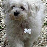 Adopt A Pet :: Lovey-NJ - Mays Landing, NJ