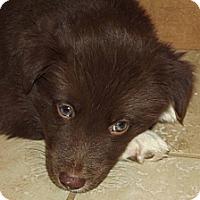 Adopt A Pet :: Florence (AKA Flo) - Phoenix, AZ