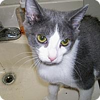 Adopt A Pet :: Canoli - Scottsdale, AZ