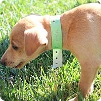 Adopt A Pet :: Conner - Fresno, CA