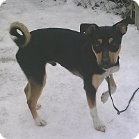 Adopt A Pet :: Willy - Oberlin, OH