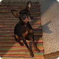 Adopt A Pet :: Rocky (Courtesy Listing) - McDonough, GA