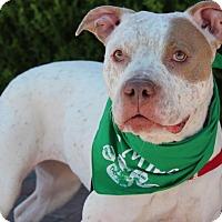 Adopt A Pet :: NOVA-TANZI - Las Vegas, NV