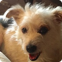 Adopt A Pet :: Maggie - Spring Valley, NY