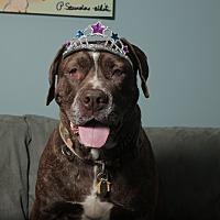 Adopt A Pet :: Sammi - Smithtown, NY