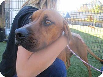 Hound (Unknown Type) Mix Puppy for adoption in Cumming, Georgia - Duke