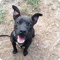 Adopt A Pet :: Negra - Groveland, FL