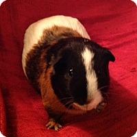 Adopt A Pet :: Benjamin - Williston, FL